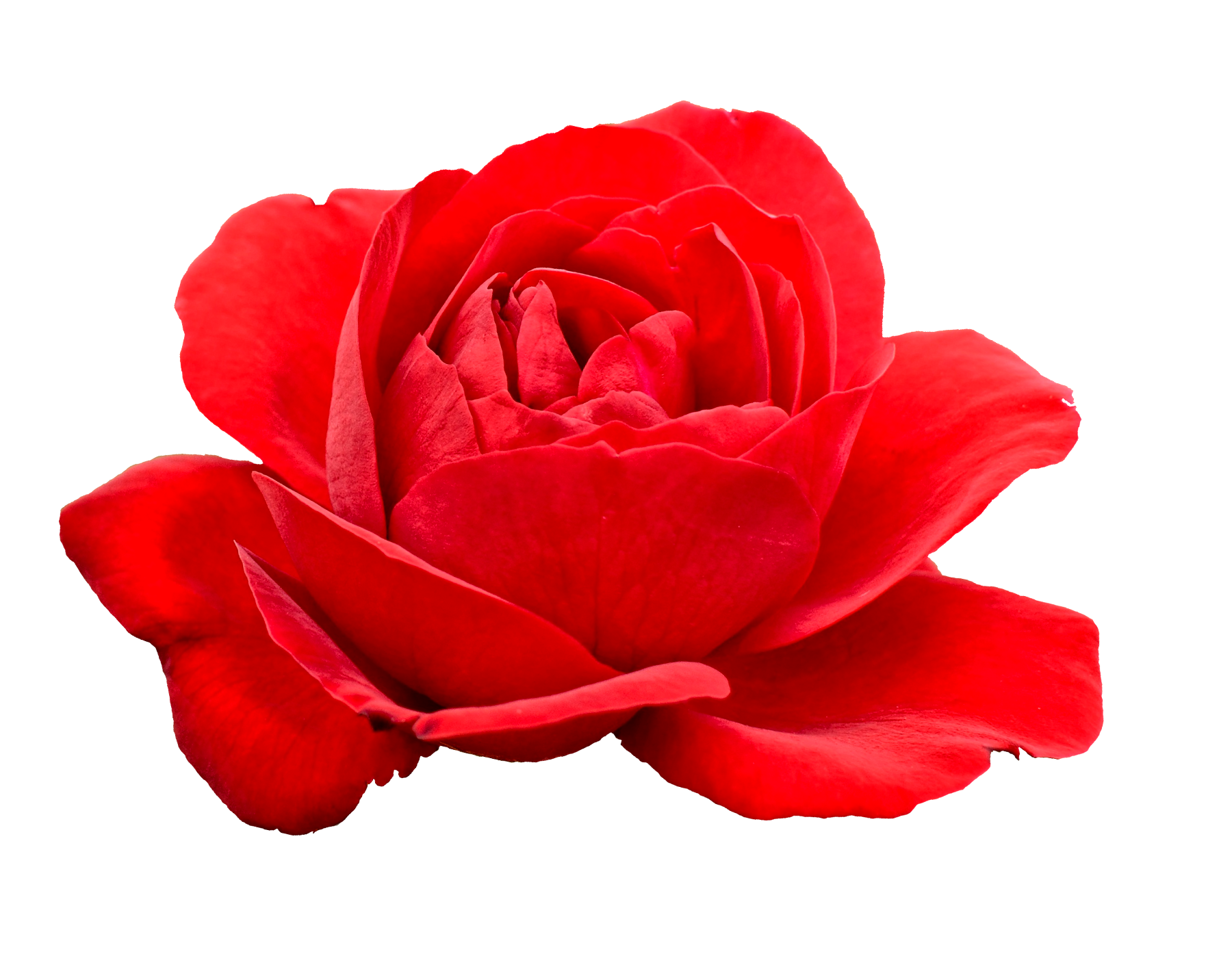 Flower icon clipart clip art royalty free library Red Rose Flower Icon Clipart - 16221 - TransparentPNG clip art royalty free library
