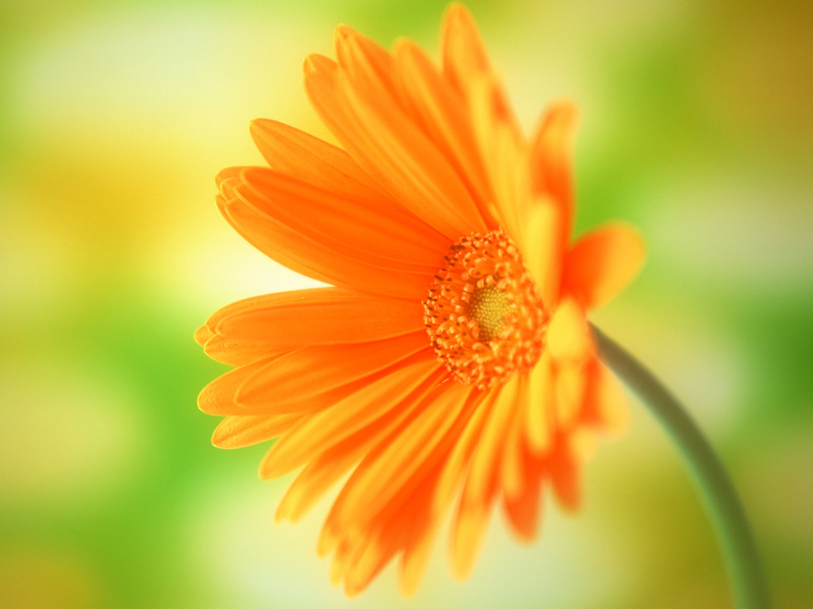 Flower image download image free stock Flower Wallpaper Download - QyGjxZ image free stock