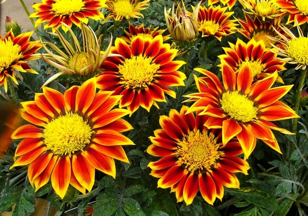 Flower images to download clip freeuse Beautiful flower garden images free stock photos download (15,803 ... clip freeuse