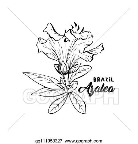 Flower ink clipart jpg Vector Illustration - Azalea, ericaceae flowers ink pen sketch. EPS ... jpg