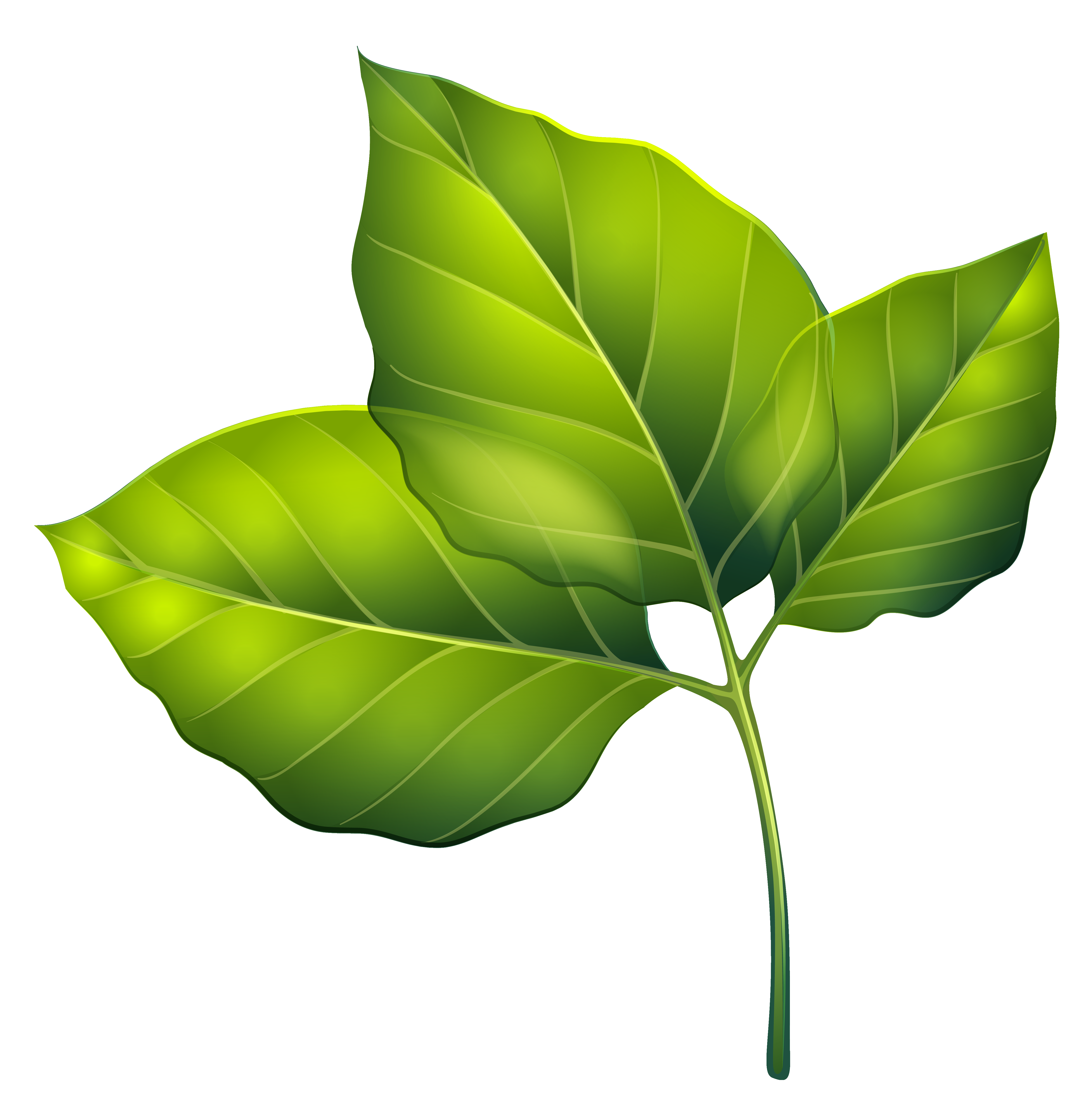 Flower leaves clipart graphic freeuse stock Three Green Leaves PNG Clipart Image | Gallery Yopriceville - High ... graphic freeuse stock