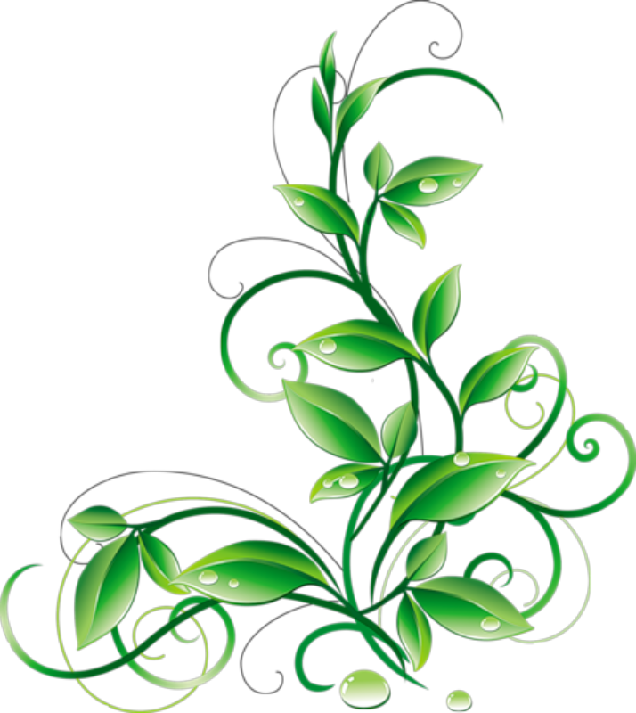 Green flower clipart jpg Floral Green Leaves And Water Droplets PNG Clipart - iCliparts.com ... jpg
