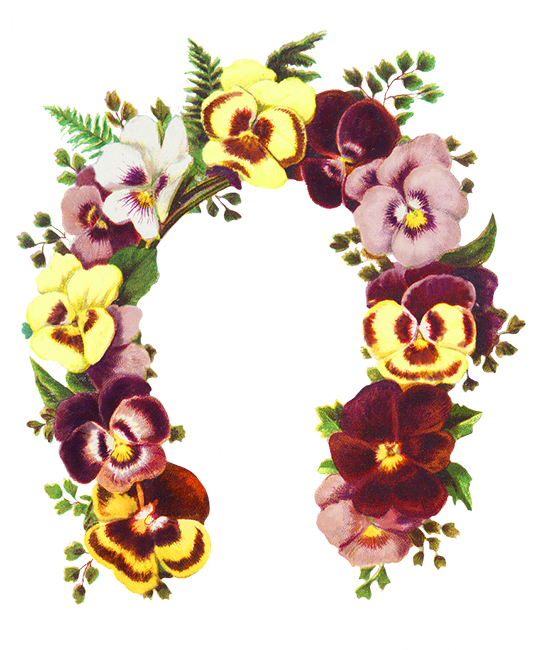 Flower lei clipart. Borders and frames flowers