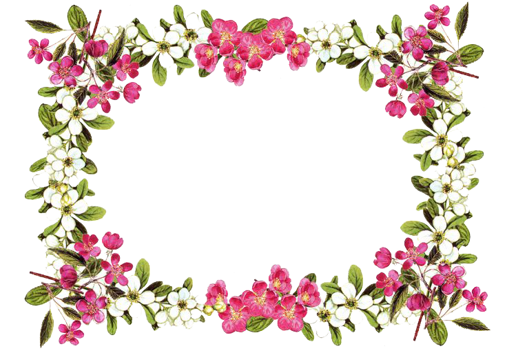 Flower lei clipart. Flowers borders png image