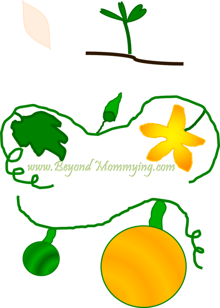 Flower life cycle clipart png black and white Life Cycle of a Pumpkin rhyme for elementary students | Music in Our ... png black and white