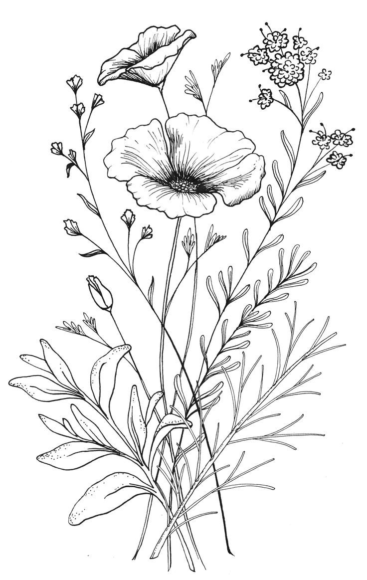 Clip art at paintingvalley. Flower line drawing clipart free