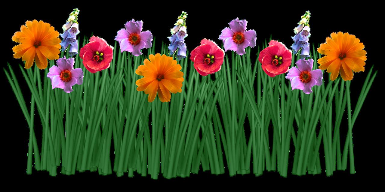 Flower meadow clipart clip library download Imagen gratis en Pixabay - Primavera, Flores, Pasto, Meadow ... clip library download