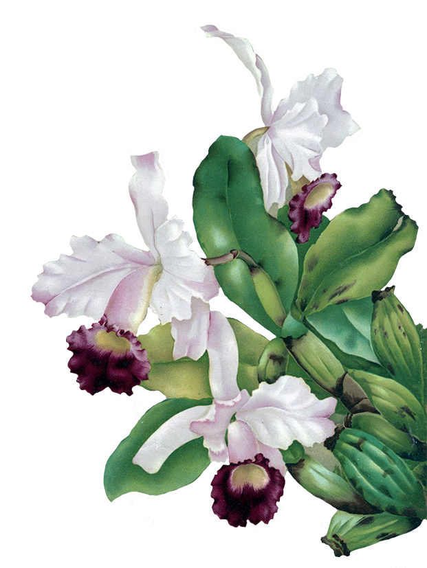 Flower painting clipart clip free stock Digital Scrapbooking Flowers clip free stock