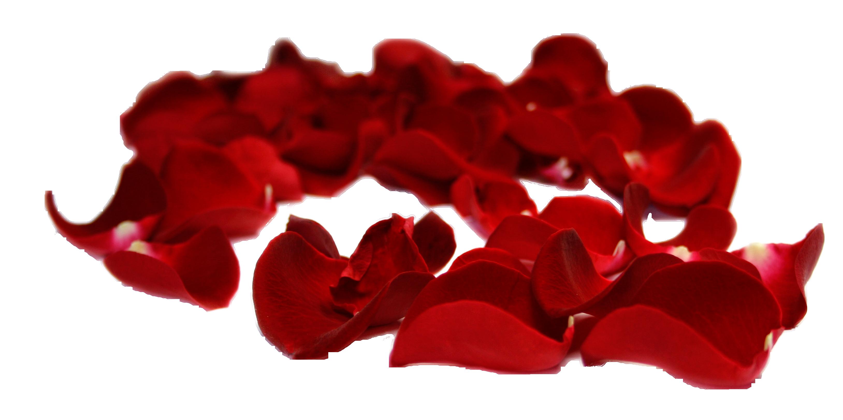 Flower petal clipart clip art free library Petal Rose Clip art - petal 3256*1622 transprent Png Free Download ... clip art free library