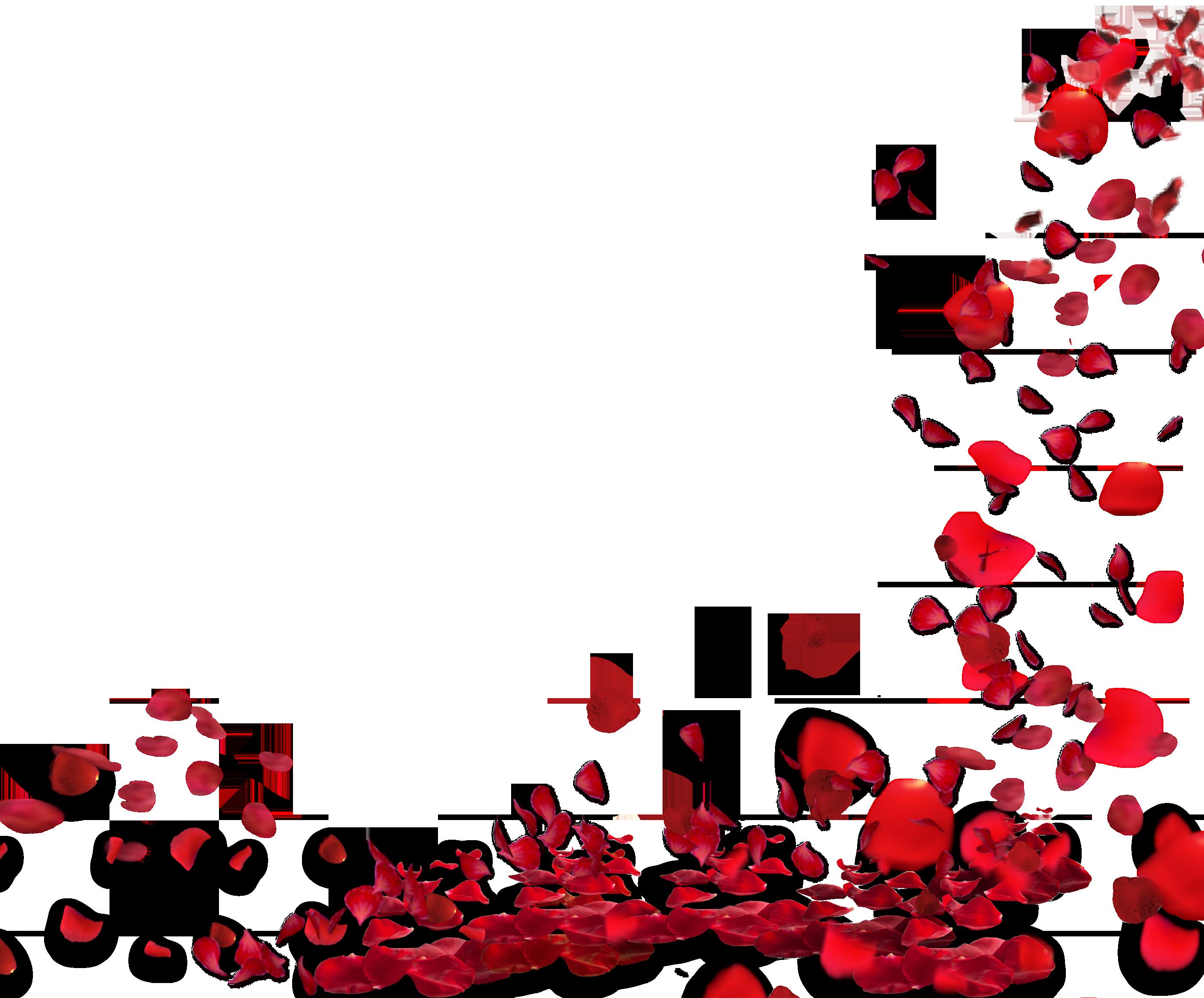 Flower petals falling clipart. Rose png images hd