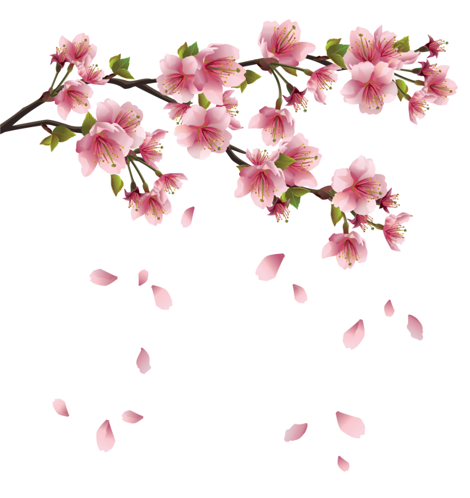 Flower petals falling clipart. Beautiful pink spring branch