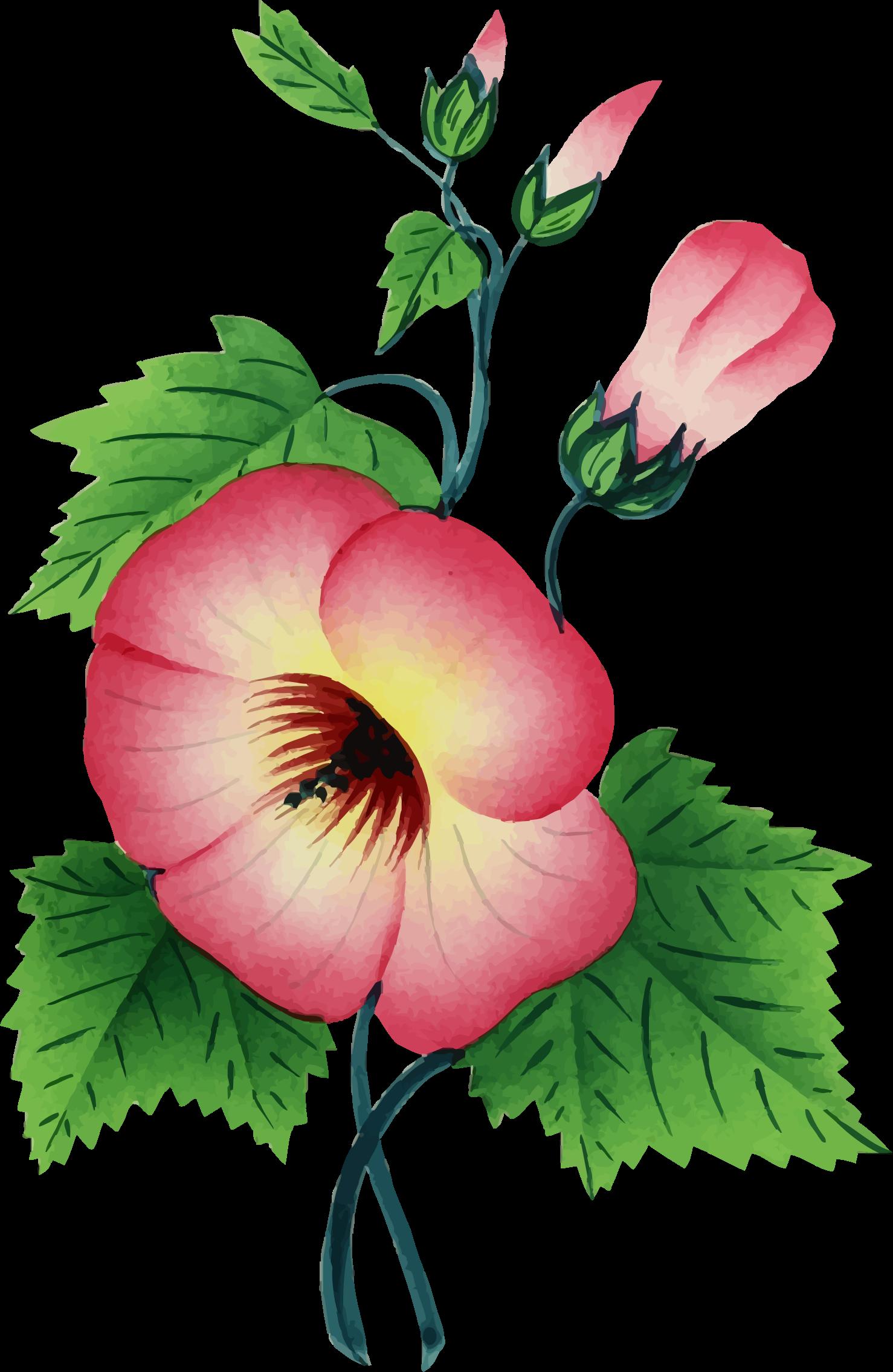 Flower plant clipart picture transparent download Clipart - Flower Illustration 3 picture transparent download