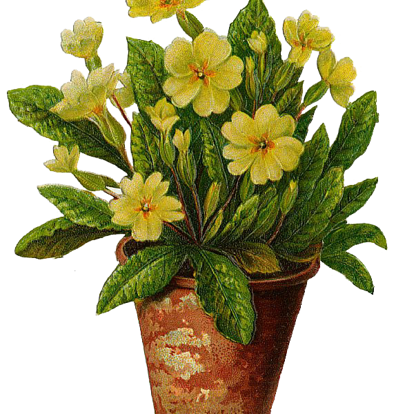 Flower pot clipart free vector transparent library The Flower Pot flowers pot free download clip art free clip art on ... vector transparent library
