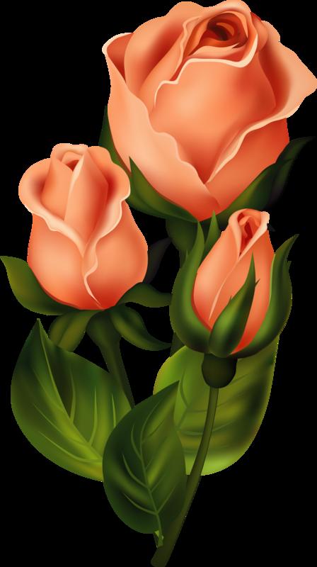 Flower reading clipart image free library roses,pink,roze,rosa, | dekopaj | Pinterest | Decoupage, Flowers and ... image free library