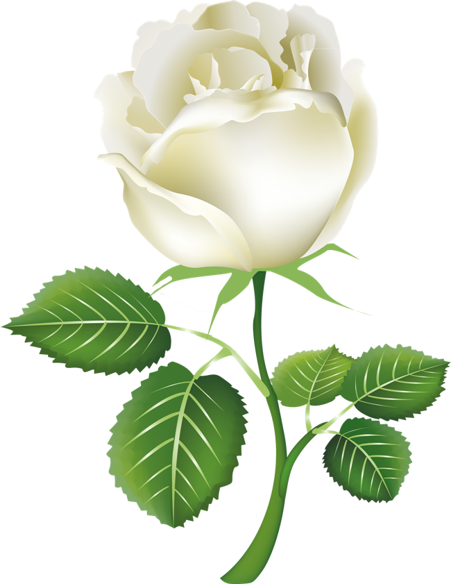 White flower clipart transparent black and white download White Roses PNG Image - PurePNG | Free transparent CC0 PNG Image Library black and white download