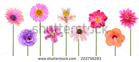 Flower row clipart banner black and white library Row Of Flowers Stock Photos, Royalty-Free Images & Vectors ... banner black and white library