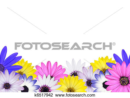 Flower row clipart clip stock Stock Photo of Row of Multi Colored Various Osteosperum Daisy ... clip stock