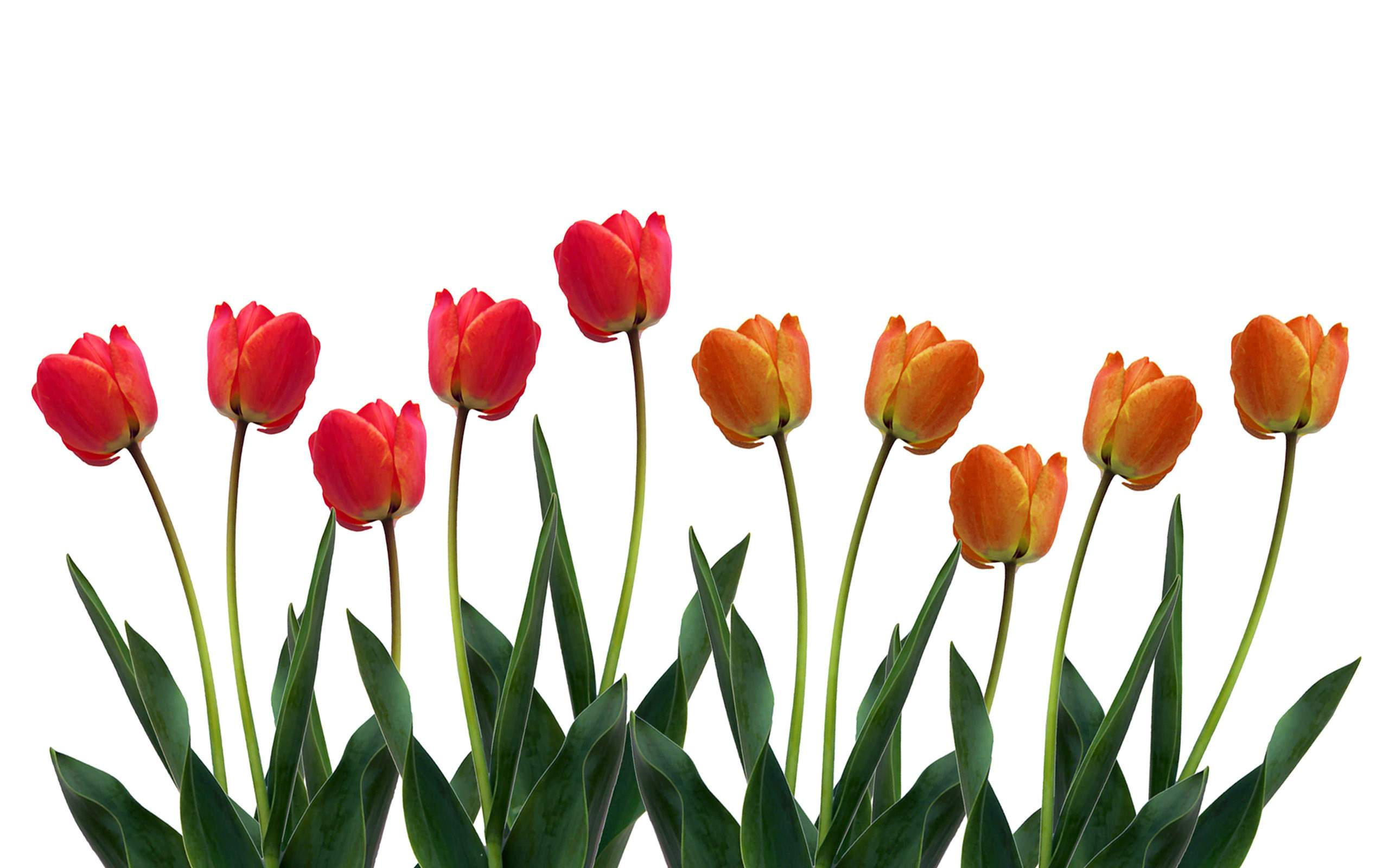 Flower row clipart banner transparent Row Of Flowers Clip Art - ClipArt Best banner transparent