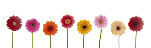 Flower row clipart graphic Flowers Stock Photos, Images, & Pictures - 1,648,339 Images graphic