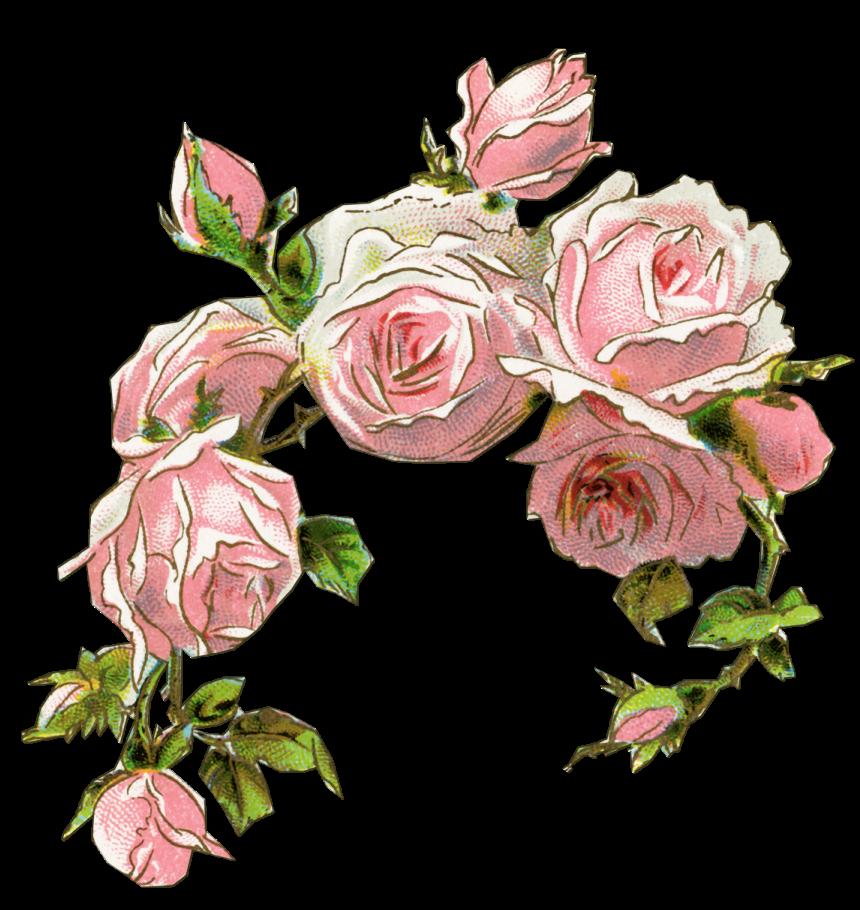 Flower shop clipart clip art transparent library Rose Pink Vintage clothing Flower Clip art - flowers watercolor 860 ... clip art transparent library