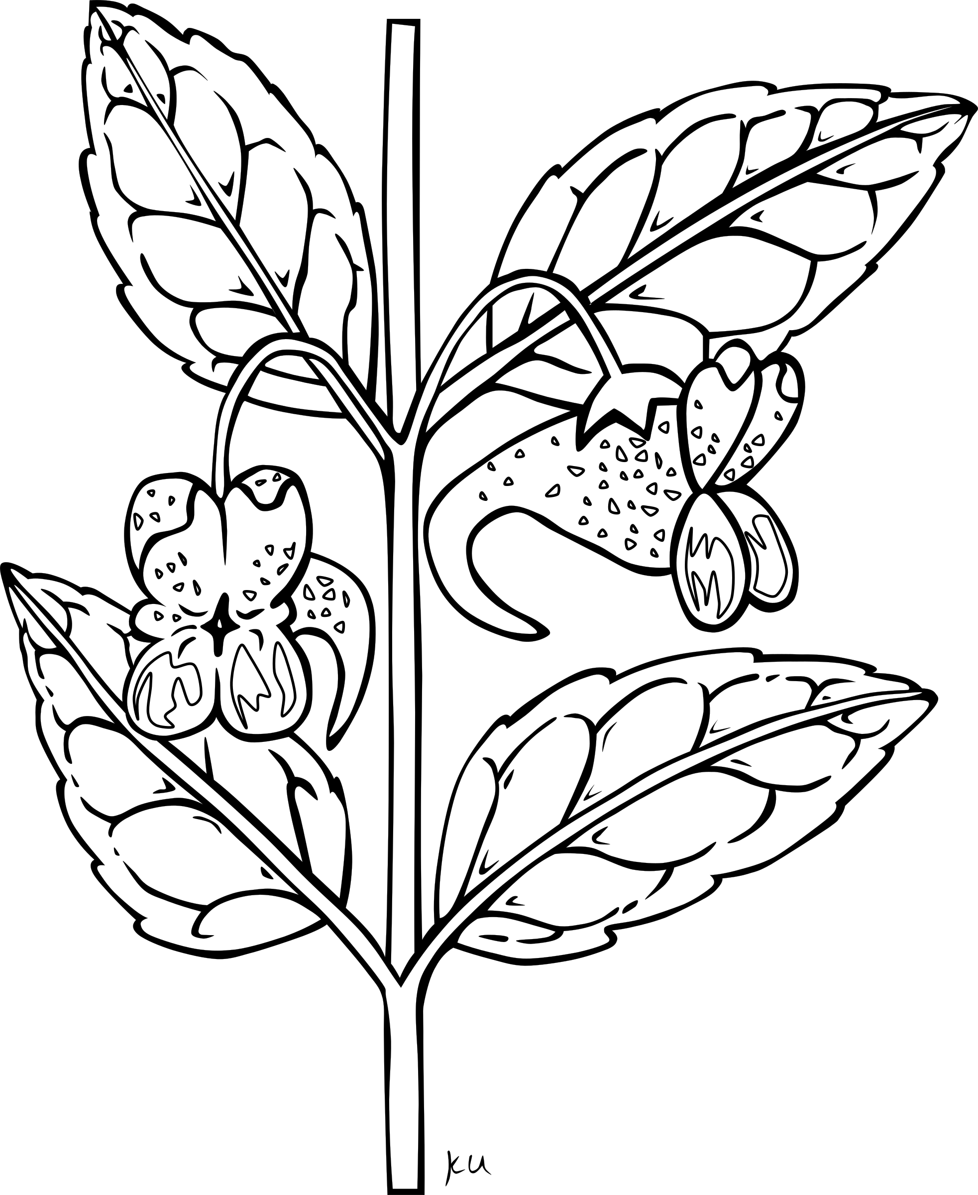 Flower stem clipart outline clip library library Clipart - Impatiens Capensis Detailed clip library library