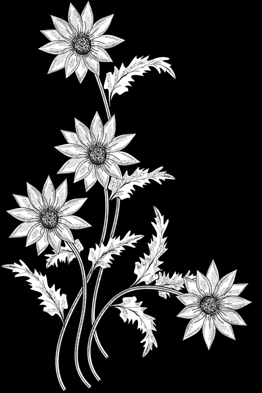 Flower stem clipart outline banner freeuse stock Stem Clipart Black And White. Garden Clipart Black And White Pencil ... banner freeuse stock