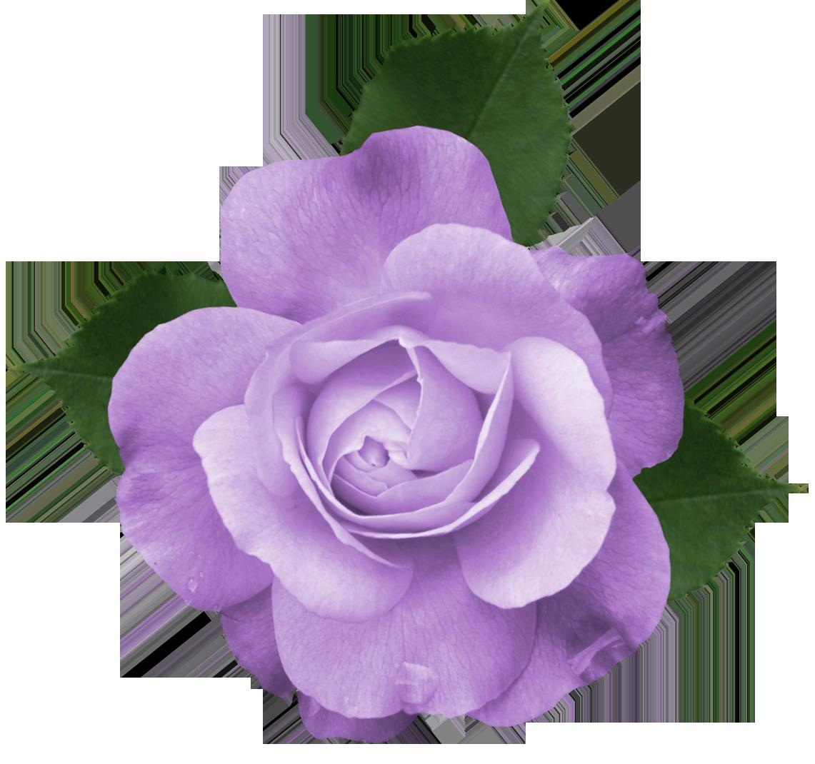Purple flower clipart transparent background