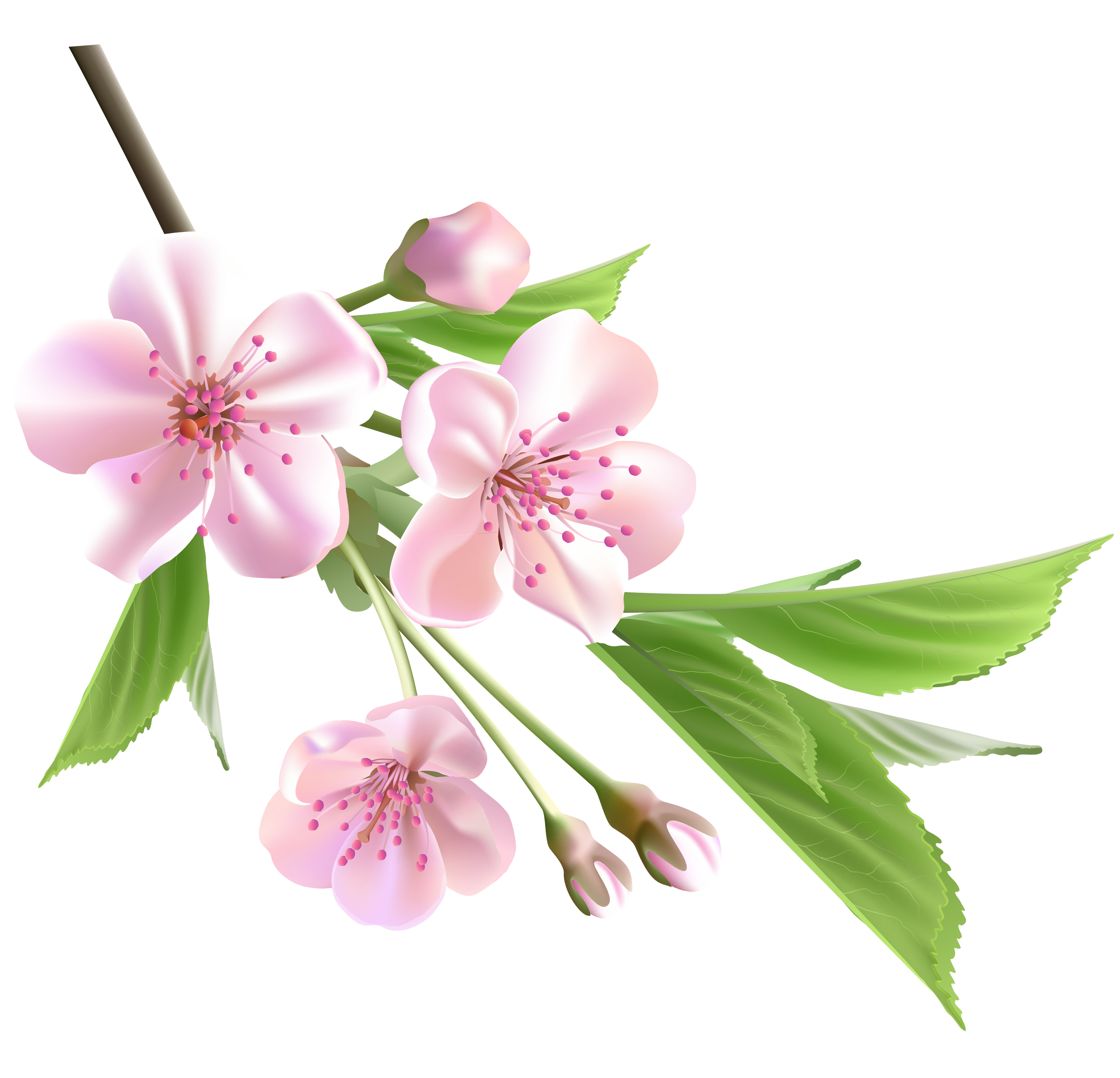 Flower tree clipart clip library Flower Drawing Tree Clip art - Spring Branch with Pink Tree Flowers ... clip library