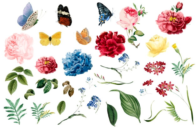 Vectors photos and psd. Flower vector graphics clipart