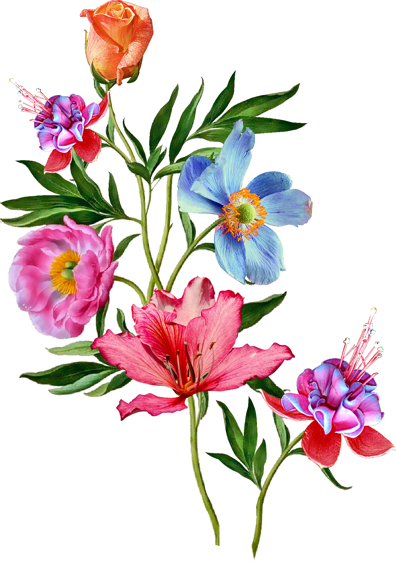 Flower wallpaper clipart image transparent library Pin by vijay on similer | Pinterest | Flowers, Flower and Botanical ... image transparent library