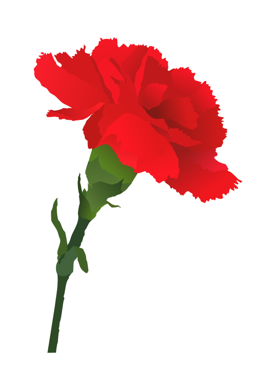 Flower with roots clipart royalty free Free Carnation Flower Cliparts, Download Free Clip Art, Free Clip ... royalty free
