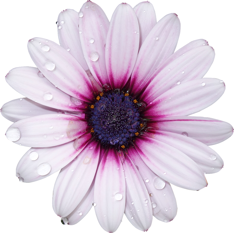 Folower picture png library library FreeToEdit png flower with a transparent background... png library library