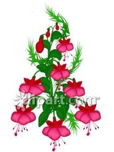 Flowering shrub clipart jpg transparent download Flowering Shrub-Fuchsia - Royalty Free Clipart Picture jpg transparent download