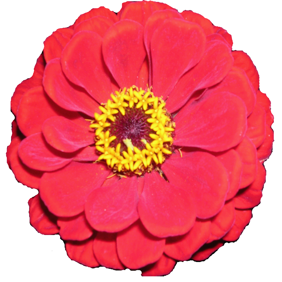 Flowers 3d clipart clip free flower 3d clipart intended for your inspiration | banyumasonline clip