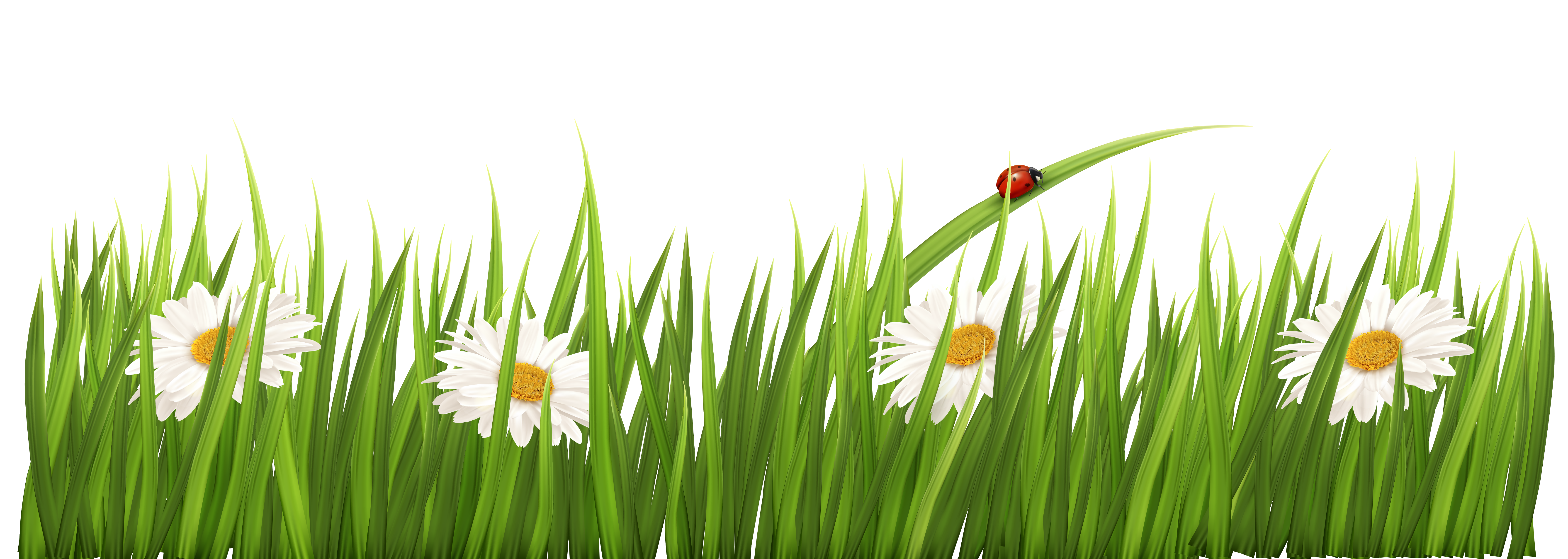 Free flower clipart with transparent background jpg library library White Flowers with Grass Transparent PNG Clipart jpg library library