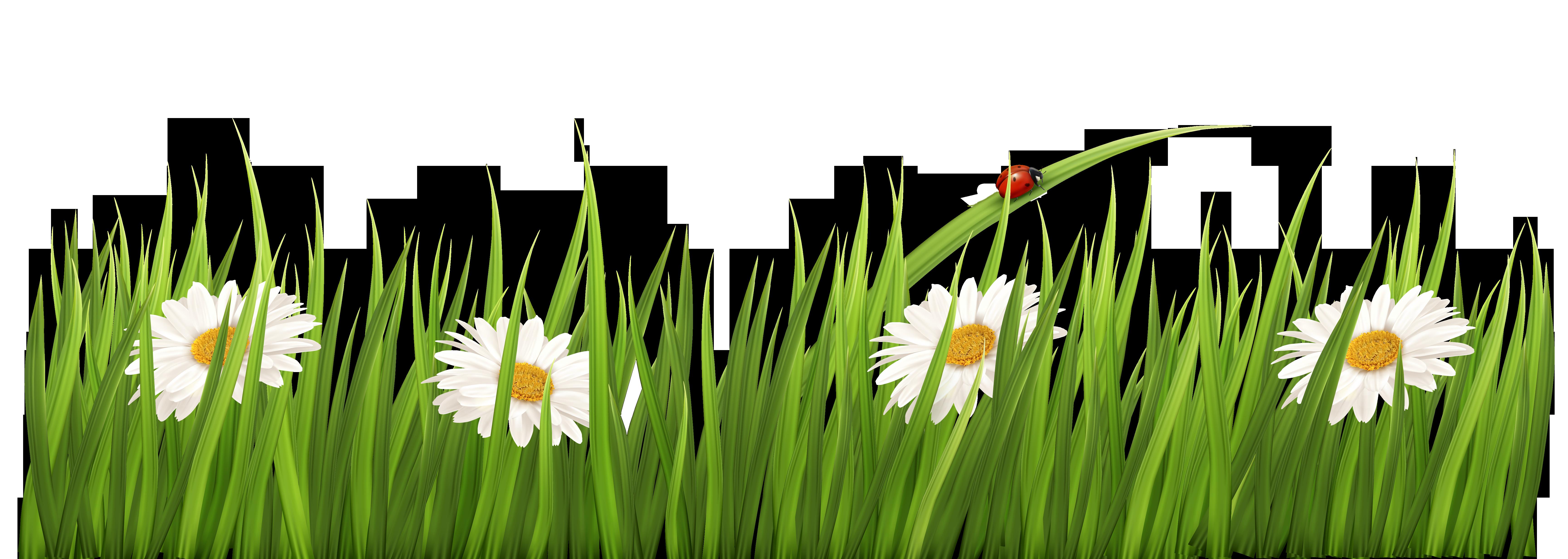 White flower clipart transparent background jpg freeuse White Flowers with Grass Transparent PNG Clipart jpg freeuse