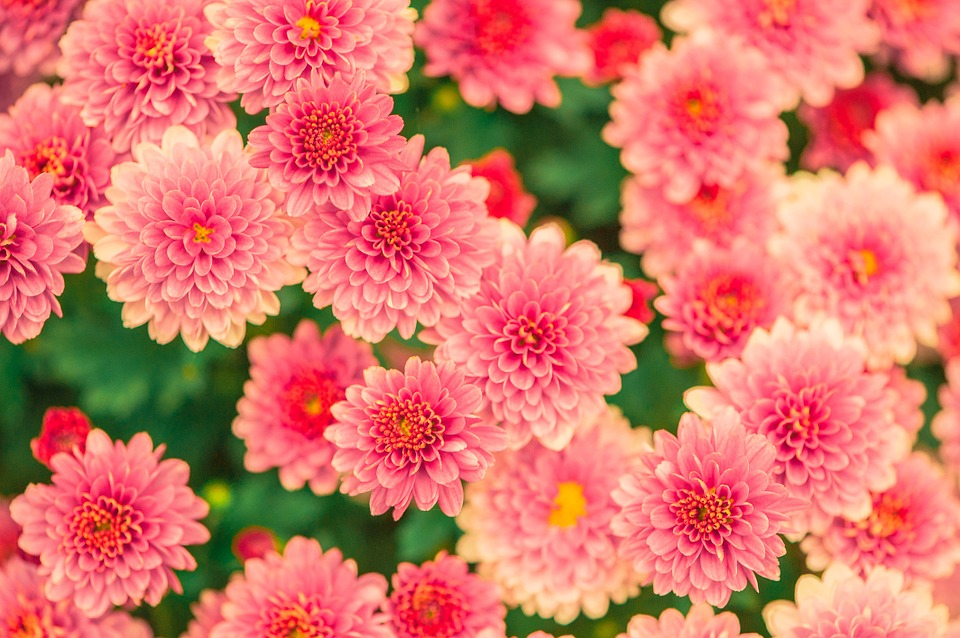 Flowers and images picture free stock Pink, Flowers - Free images on Pixabay picture free stock