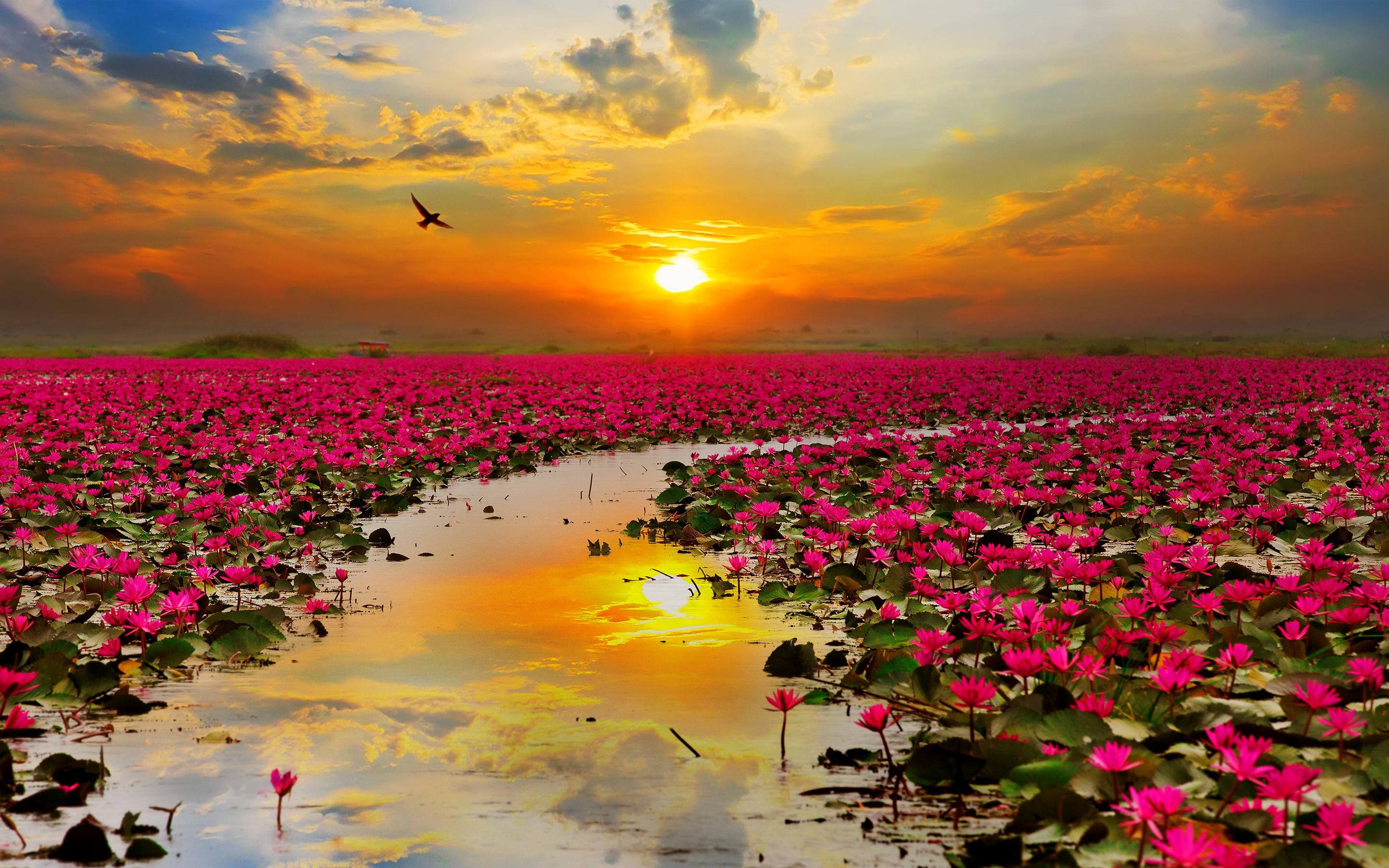 Flowers and images banner freeuse Lotus Flowers Wallpapers | HD Wallpapers banner freeuse