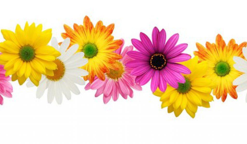 Flowers borders clip art png Flower Borders Clip Art & Flower Borders Clip Art Clip Art Images ... png