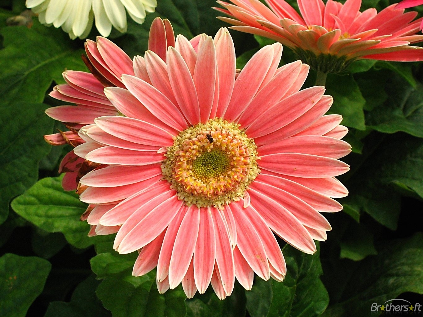 Flowers free picture royalty free download Free image flowers - ClipartFest picture royalty free download