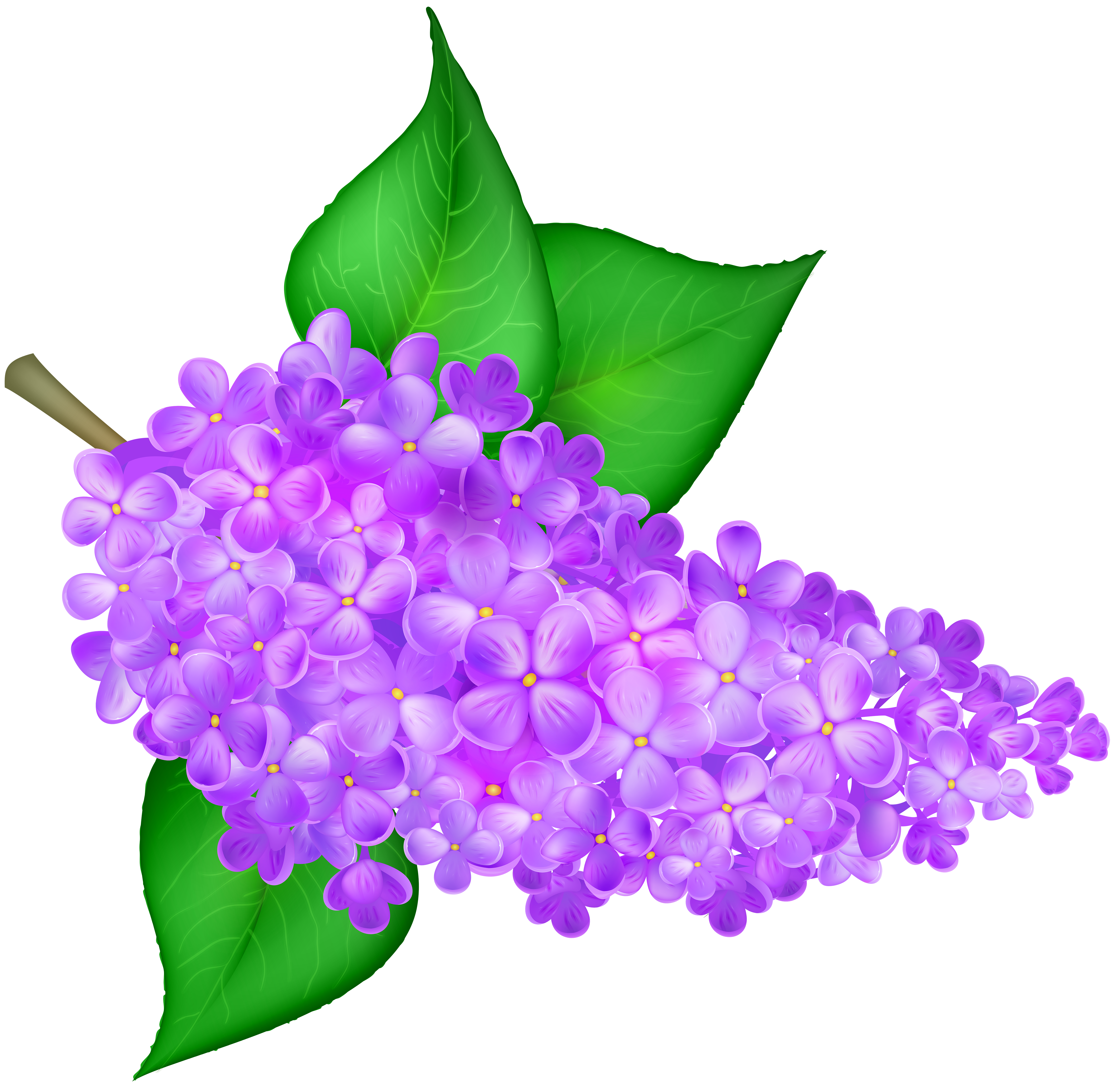 Flowers free clip art vector royalty free library Lilac Flower Transparent PNG Clip Art Image | Gallery Yopriceville ... vector royalty free library