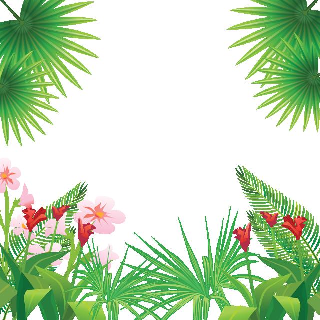 Flower reaching for sun clipart. Tropical leaves flowers frame