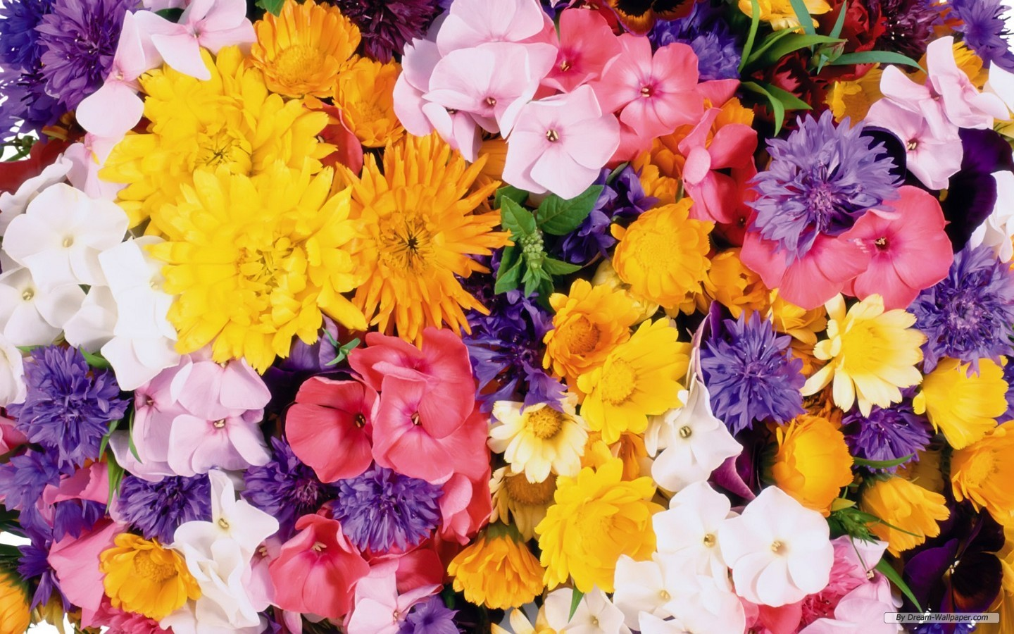 Flowers free image banner stock Wallpapers Flowers Free (76+) banner stock