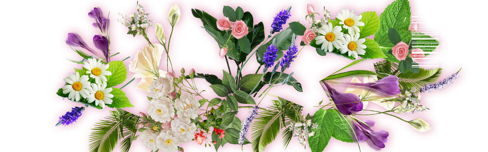 Photos flowers free clip library download Flower Leaf Floral design - Free to pull flowers 1920*600 transprent ... clip library download