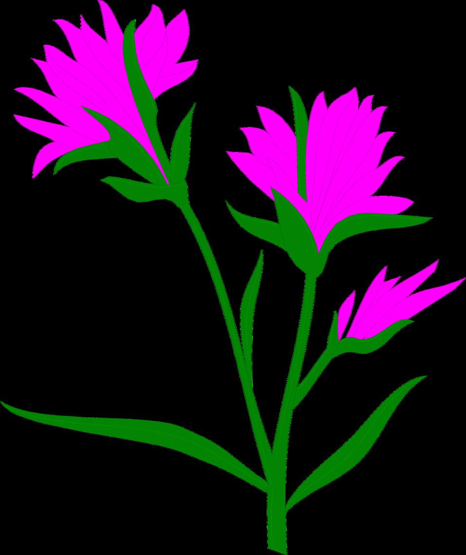 Flowers free photos image transparent download Indian Paintbrush | Free Stock Photo | Illustration of purple Indian ... image transparent download