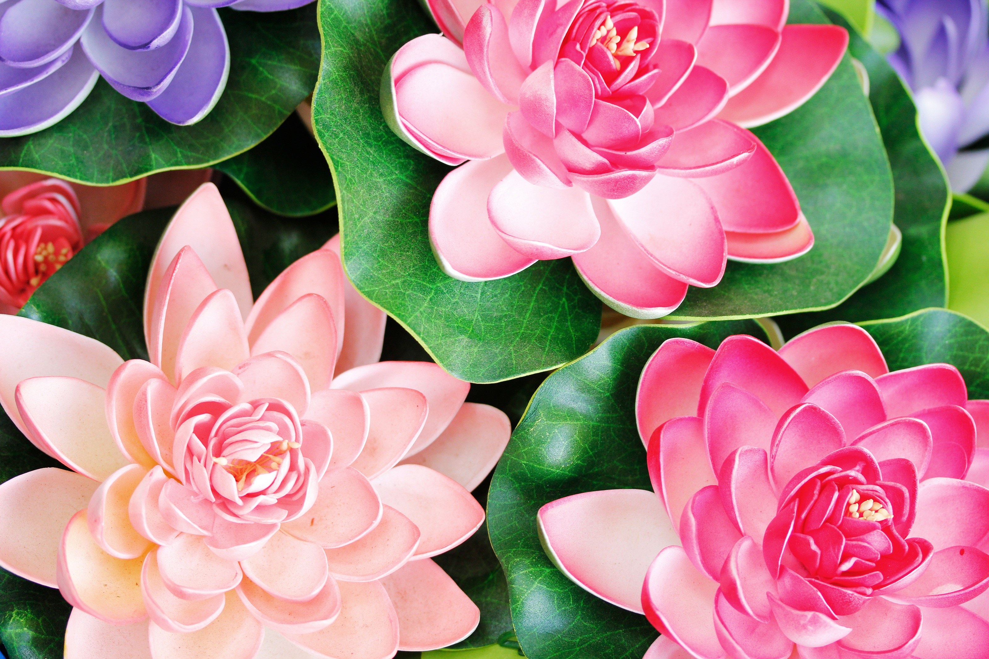 Flowers image download png free stock Lotus Flower Free Download – Free wallpaper download png free stock