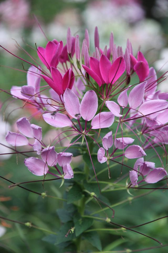 Flowers image free jpg Flowers photos free - ClipartFest jpg