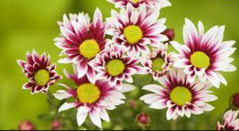 Flowers image free download clipart royalty free stock World's Top 100 Beautiful Flowers Images Wallpaper Photos Free ... clipart royalty free stock