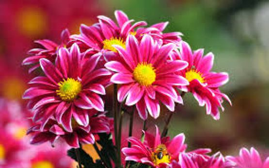 Flowers images for free download clip library World's Top 100 Beautiful Flowers Images Wallpaper Photos Free ... clip library