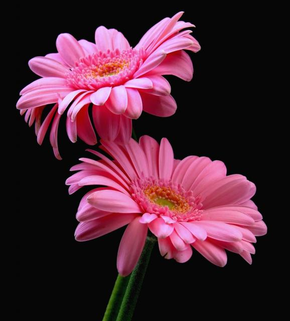 Flowers jpg images freeuse download Flowers jpg images - ClipartFest freeuse download